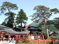 太鼓谷稲荷神社の大赤松